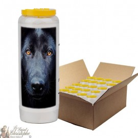 Novena candle for animals 5 - box 20 pieces